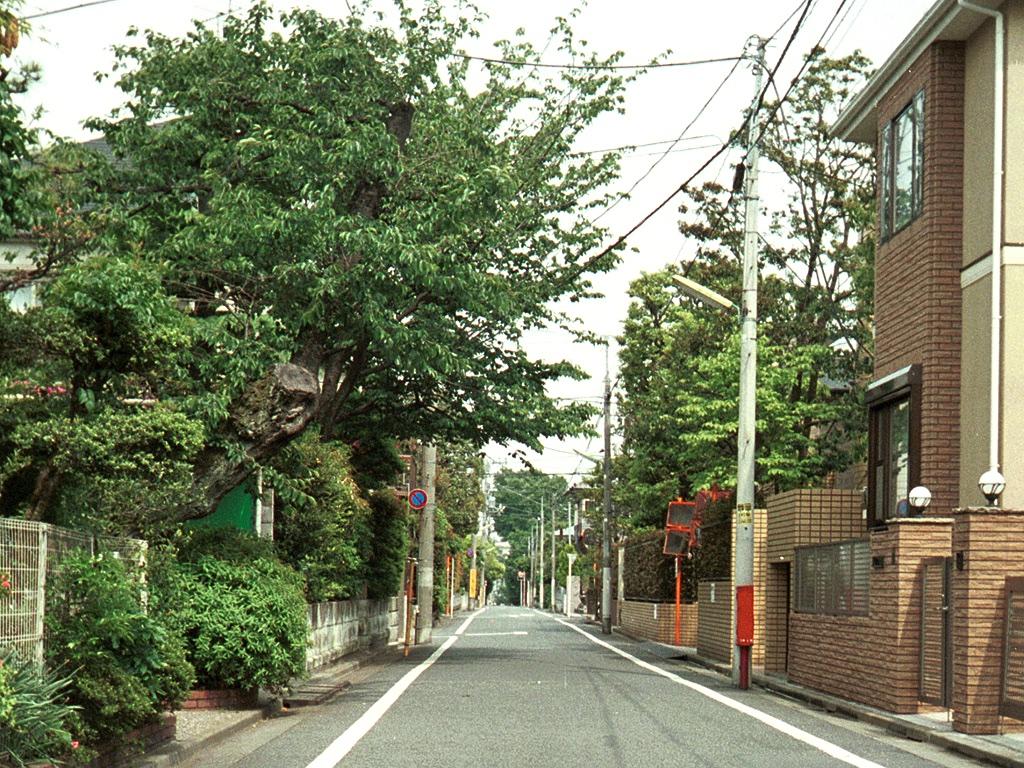 keyakimichi-1.jpg